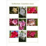 Collection de Lauriers-roses