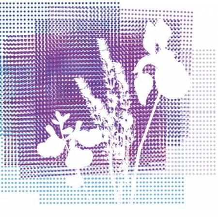 Collection d'euphorbes - Euphorbia