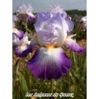 Iris 'Conjuration'