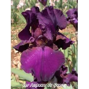 Iris 'Thriller'