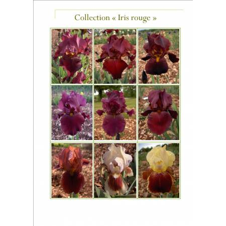Collection d'Iris rouges