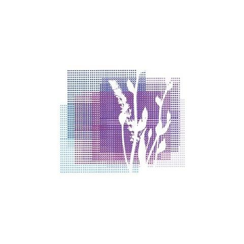 Salvia lavandulifolia subsp. vellerea - Sauge àfeuille de lavande