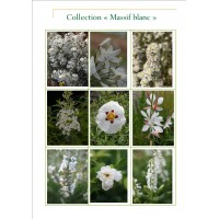 Collection jardin blanc
