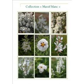 Collection jardin blanc