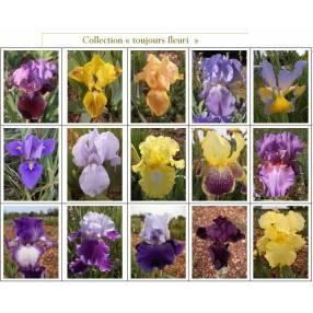 Collection toujours fleuri