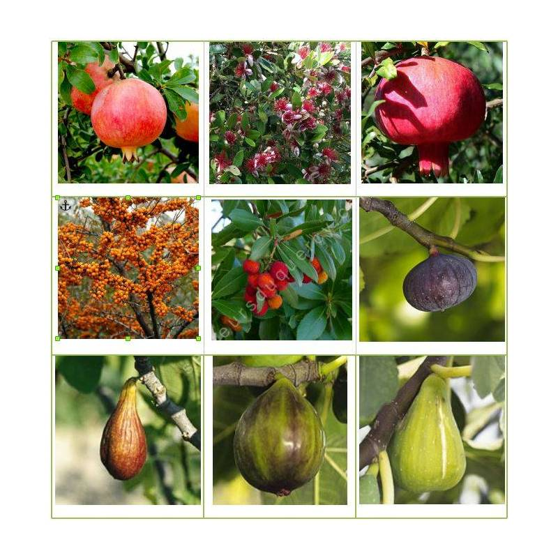 Collection d'arbres fruitiers