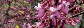 Arbustes - Arbres