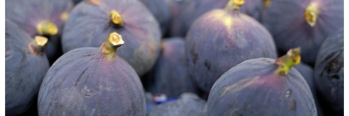 Fruitiers | Figuier - Arbousier - Grenadier