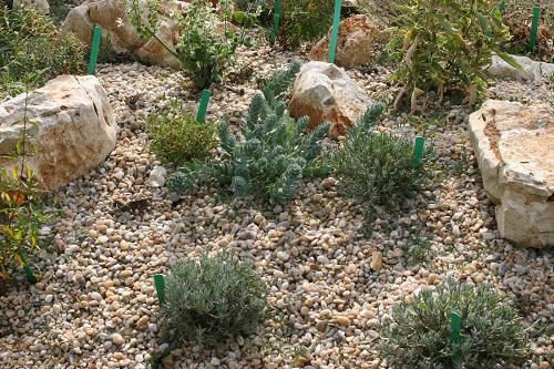 Massif de plantes 6 mois après la plantation